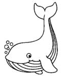 Illustration du profil de petitebaleine