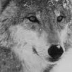 Photo de Profil de Snow